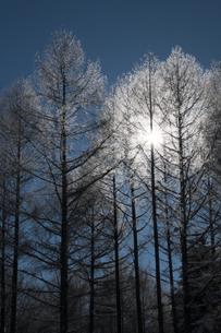 霧氷の写真素材 [FYI00188860]