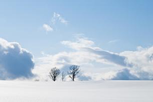 雪原に立つ三本の木の写真素材 [FYI00188886]