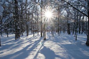 冬の公園の写真素材 [FYI00188912]