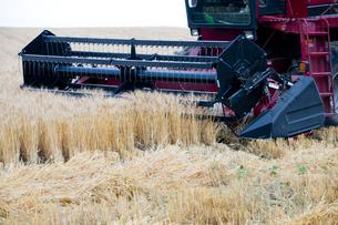 麦の刈り入れの写真素材 [FYI00188967]