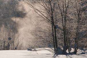 川霧の立つ朝の写真素材 [FYI00188999]
