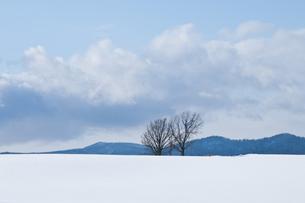 雪原に立つ3本の木の写真素材 [FYI00189000]