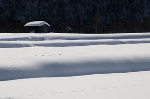 雪景色の写真素材 [FYI00189001]
