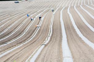 春の農作業の写真素材 [FYI00189014]