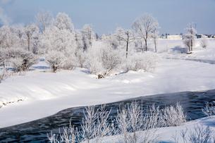 朝の冬景色の写真素材 [FYI00189017]