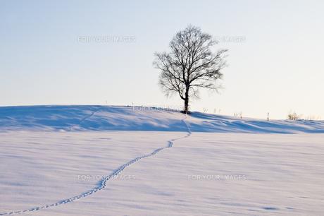 積雪の丘と足跡の素材 [FYI00189096]
