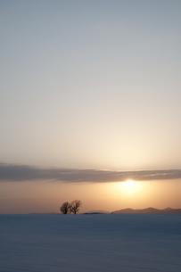 夕暮れの丘に立つ三本の木の写真素材 [FYI00189108]