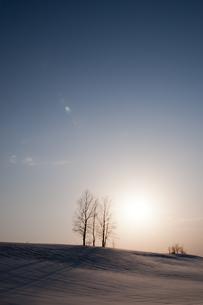 夕暮れの丘に立つ三本の木の写真素材 [FYI00189126]