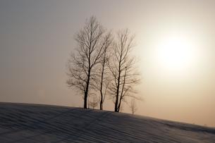 夕暮れの丘に立つ三本の木の写真素材 [FYI00189129]
