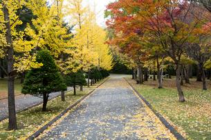 秋の公園の写真素材 [FYI00189143]