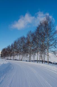 雪道とシラカバ並木の写真素材 [FYI00189167]