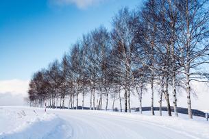 雪道とシラカバ並木の写真素材 [FYI00189169]