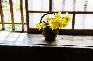 窓辺のスイセンの写真素材 [FYI00189218]