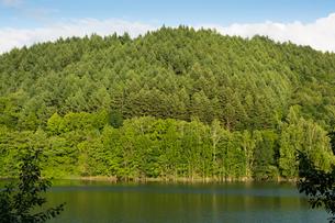 新緑の山の写真素材 [FYI00189238]