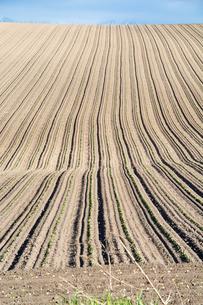 春の畑の写真素材 [FYI00189276]