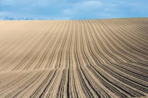 春の畑の写真素材 [FYI00189284]