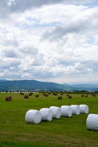 牧草ロールのある風景の写真素材 [FYI00189309]