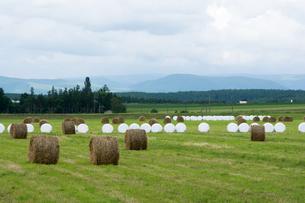牧草ロールのある風景の写真素材 [FYI00189331]