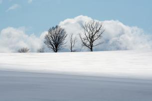 雪の丘の上の三本の木の写真素材 [FYI00189341]
