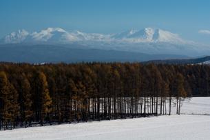 カラマツ林と初冬の大雪山の写真素材 [FYI00189344]