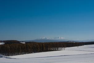 カラマツ林と大雪山の写真素材 [FYI00189357]