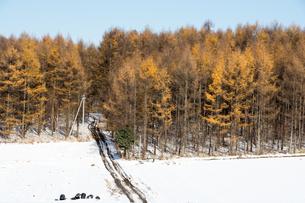 色づいたカラマツ林の写真素材 [FYI00189360]