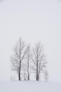 真冬の丘の三本の木の写真素材 [FYI00189369]