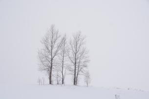 真冬の丘の三本の木の写真素材 [FYI00189370]