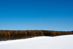 カラマツ林と青空の写真素材 [FYI00189371]