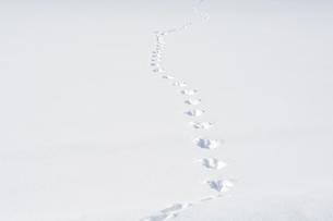 雪上の野生動物の足跡の素材 [FYI00189372]