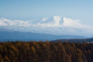 カラマツ林と大雪山の写真素材 [FYI00189376]