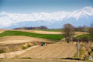 残雪の山並みと春の畑の写真素材 [FYI00189596]