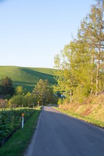 新緑のシラカバと緑の丘の写真素材 [FYI00189614]