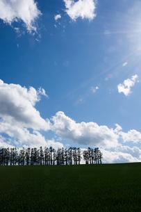 初夏の青空とマツ並木の写真素材 [FYI00189658]
