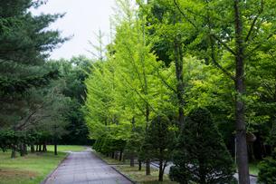 新緑の公園の写真素材 [FYI00189692]
