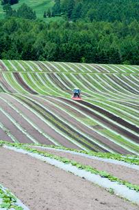 初夏の農作業の写真素材 [FYI00189693]