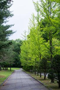 初夏の公園の写真素材 [FYI00189696]