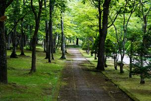 初夏の公園の写真素材 [FYI00189700]