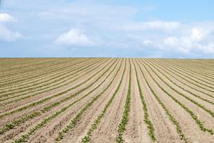 初夏の畑の写真素材 [FYI00189723]