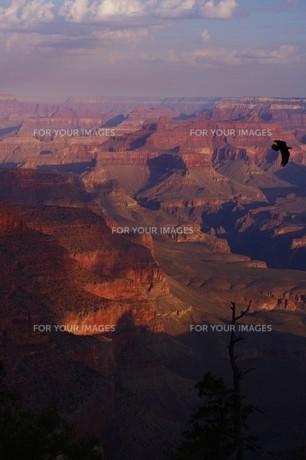 鳥とグランドキャニオンの写真素材 [FYI00189799]