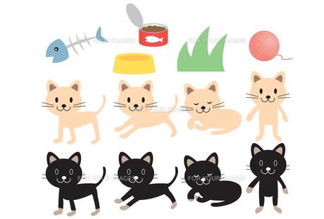 子猫の素材 [FYI00189994]
