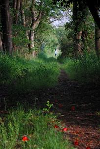 林の素材 [FYI00190000]