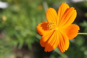 Flower at the roadsideの写真素材 [FYI00190006]