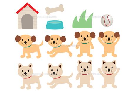 子犬の素材 [FYI00190015]