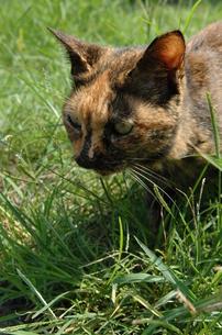 野良猫の写真素材 [FYI00190579]