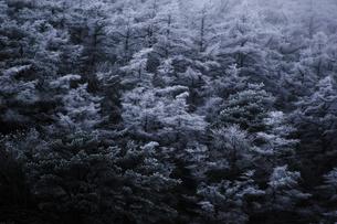 樹氷の素材 [FYI00190683]