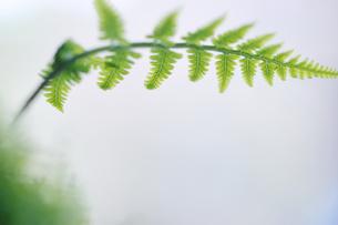 若い緑の写真素材 [FYI00190755]