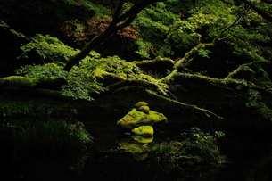 泉に浮かぶ緑の写真素材 [FYI00190813]