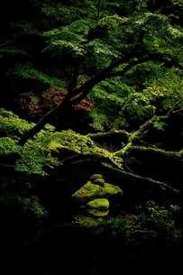 苔石の泉の写真素材 [FYI00190816]