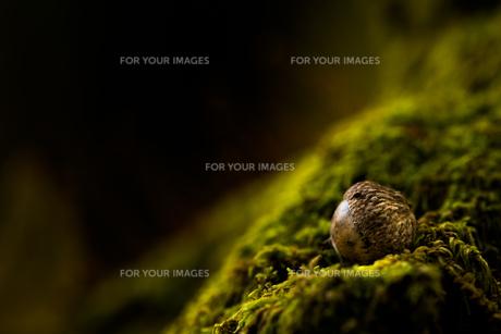 森のどんぐりの写真素材 [FYI00190917]